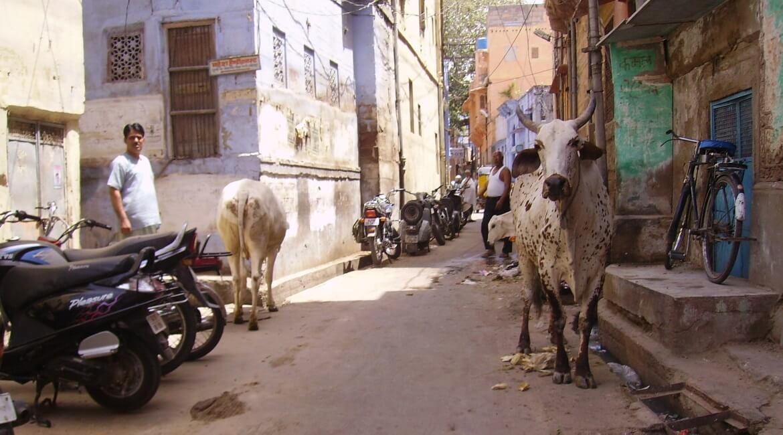 Índia: política, geografia e idiomas