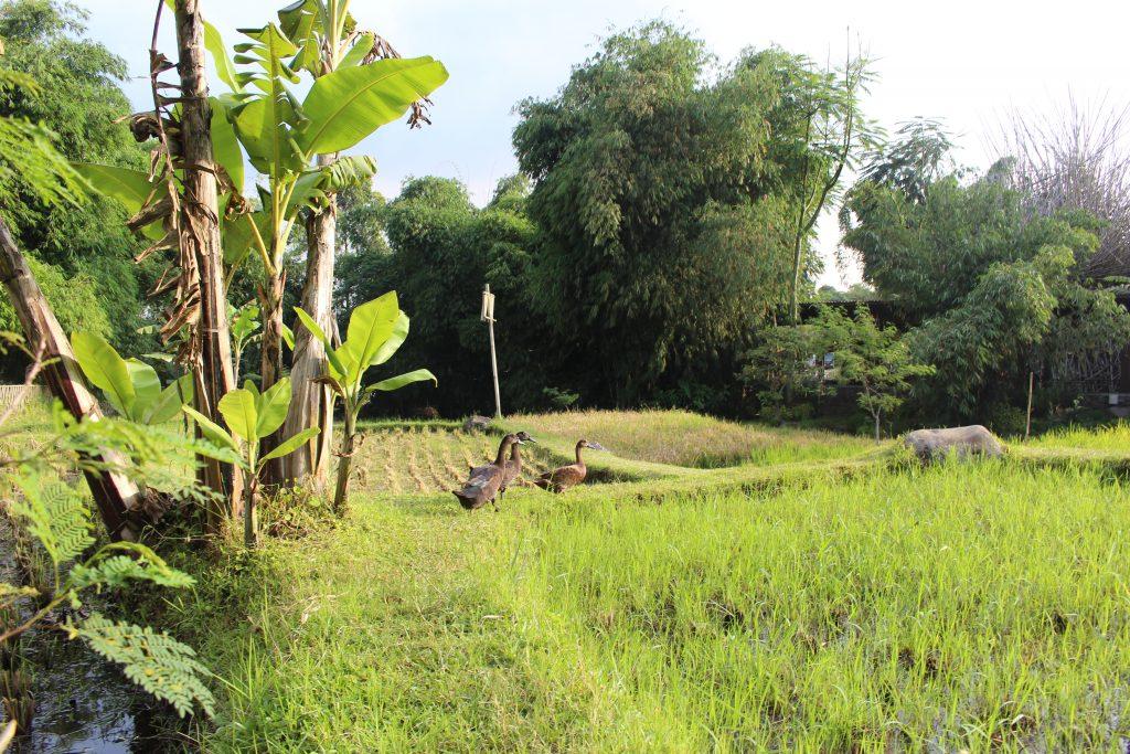 Bandung surroundings, Java, Indonesia