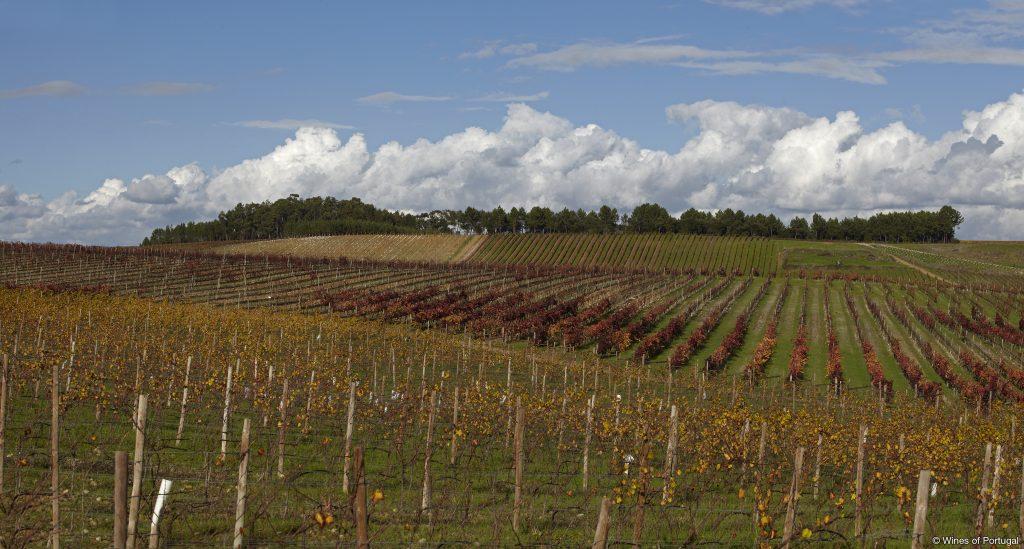 Região da Bairrada (Fonte: Wines of Portugal)