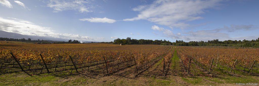 Região do Dão (Fonte: Wines of Portugal)