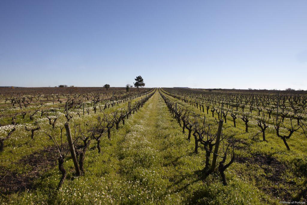 Região do Tejo (Fonte: Wines of Portugal)