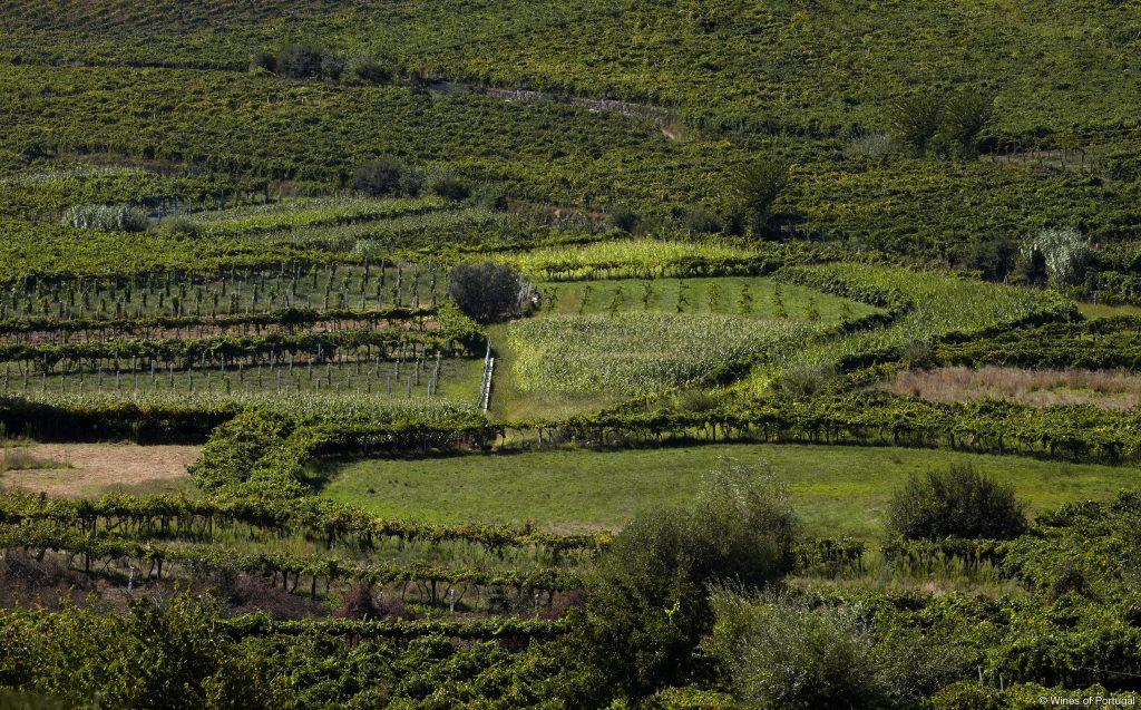 Região do Vinho Verde (Fonte: Wines of Portugal)