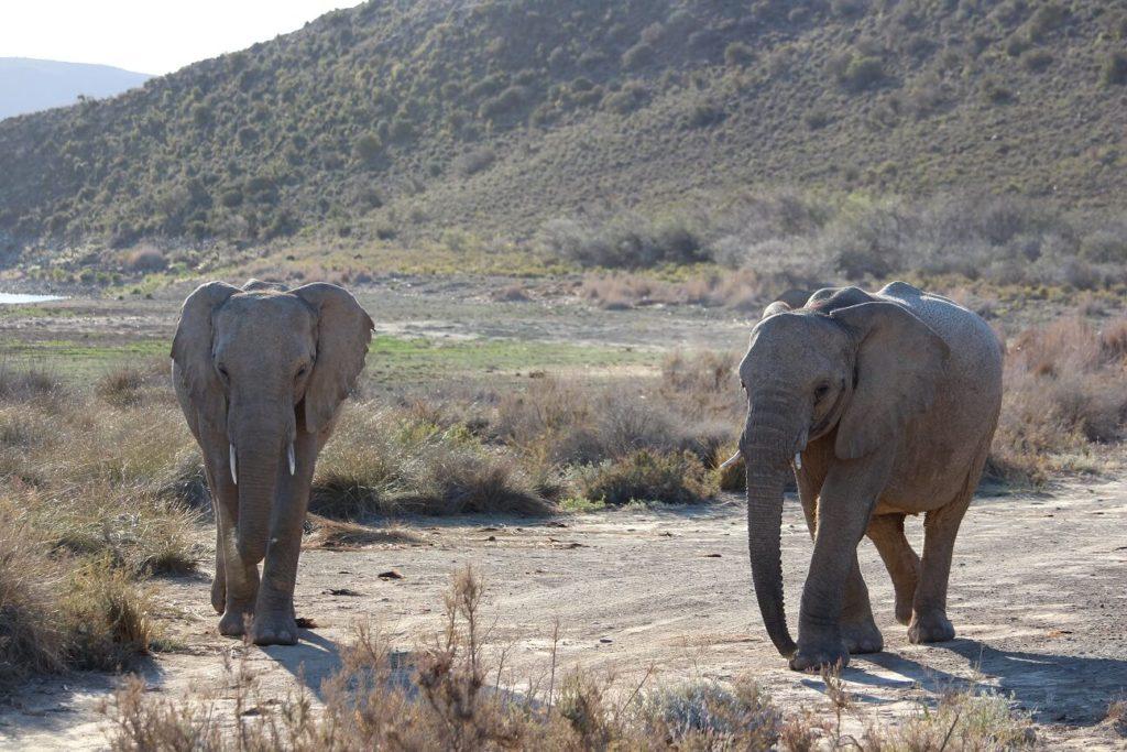 2 dias perfeitos no Sanbona Wildlife Reserve