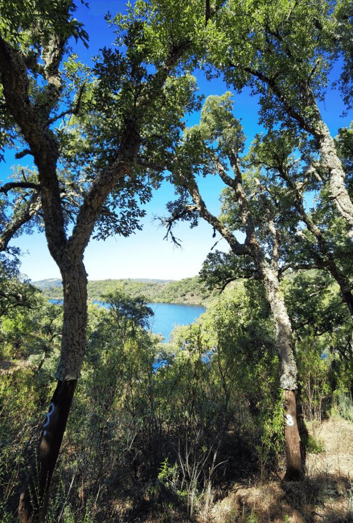 Trilho Quercus - Nove Passos